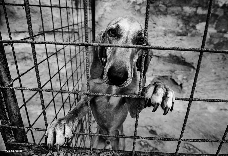 foto di un cane dietro le sbarre
