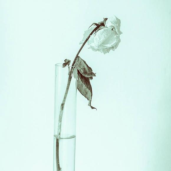 fiore bianco sfondo bianco