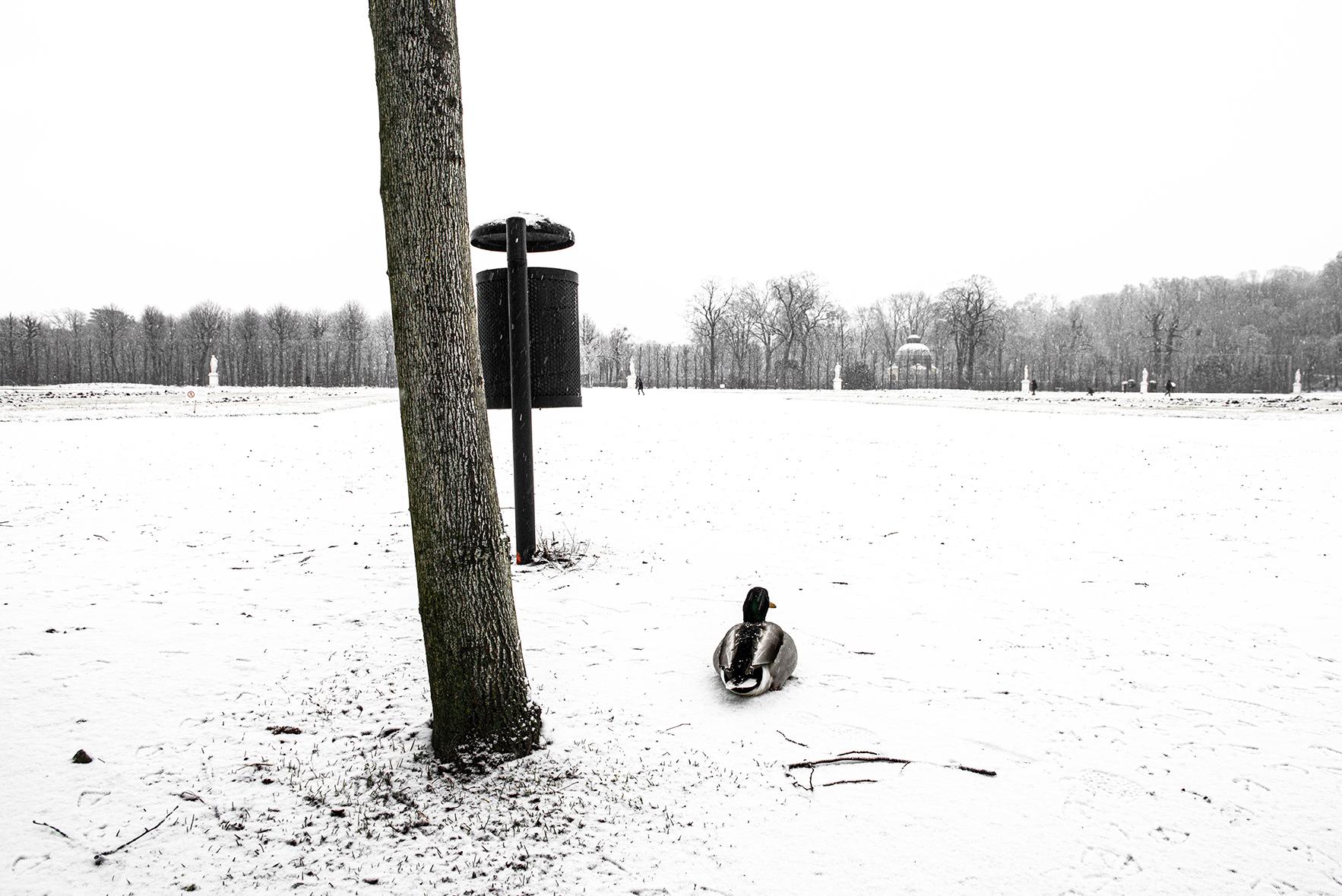 Neve a Vienna